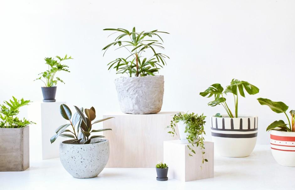 نباتات الزينة – الصفحة 2 – mshatelna
